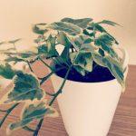 無印良品で観葉植物を購入しました!